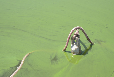 scum: An anchor sits in shallow water, but its presence is obscured by a thin layer of scum made up of blue-green algae Stock Photo