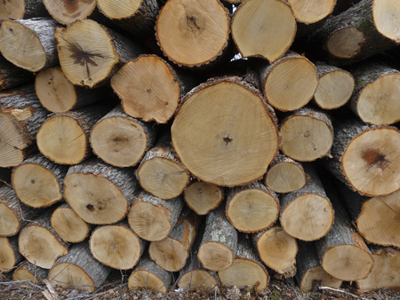 A pile of White Oak (Quercus alba) logs awaiting transport to the sawmill