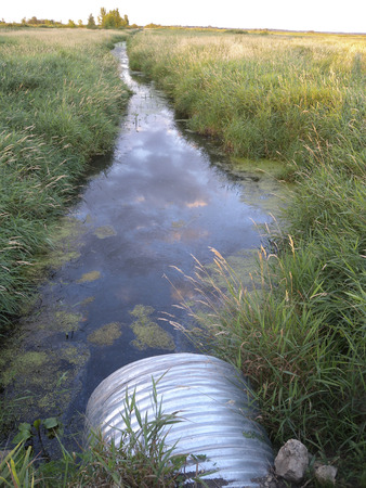 ditch: Drainage ditch running through marshland.