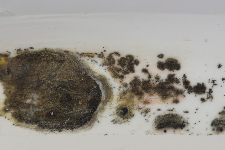 Black mold grows on the caulk of a bathtub in this bathroom.  In large quantities the mold spores can cause breathing problems.