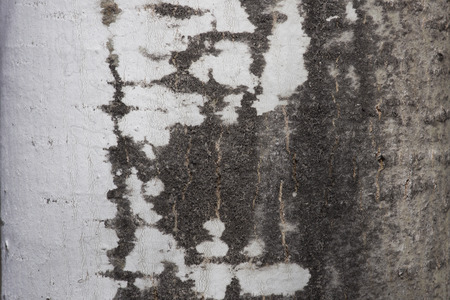 tremante: Primo piano dei modelli della corteccia sul tronco di un Quaking Aspen (tremuloides Populous)