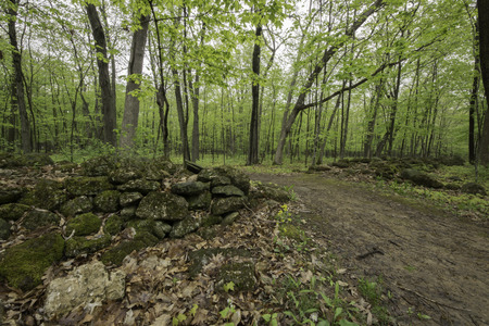 A hiking trail cutting through an old stone wall that once marked the edge of an old farm field but is now covered with trees.