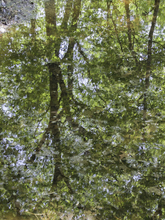 Reflection of a tree in a mirro-like water of a puddle