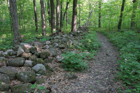 rockwall: Hiking trail leading through and old stone fence.