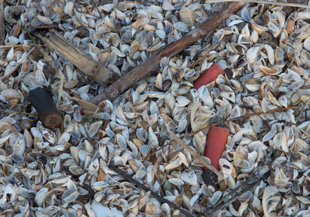 invasive species: Old shotgun shells are found amoung the shells of zebra mussels. Stock Photo