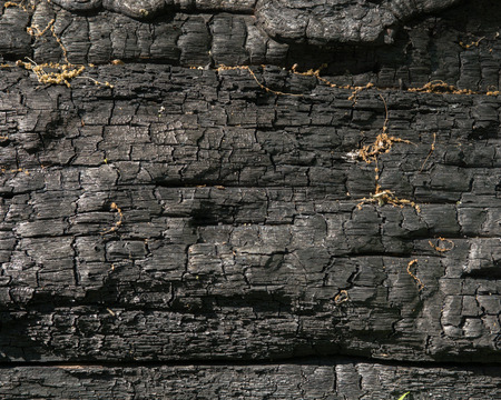 Blackened charred log after a forest fire burned through. Stock Photo