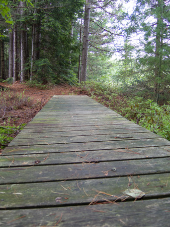 boardwalk trail: A boardwalk of wooden planks takes walkers over a wet spot on a hiking trail through the woods.