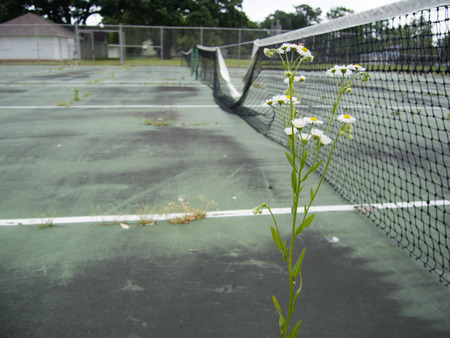 Budget cuts mean the physical fitness program and this tennis court and net have been neglected.  So bad is the problem large cracks are growing grass and other weeds.