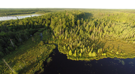 pine creek: Aerial view of two lakes, surrounded by pine forests and connected by a winding creek in the morning light.
