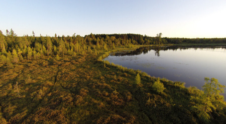 Elevated view of a moss filed bog on a northern Wisconsin Lake