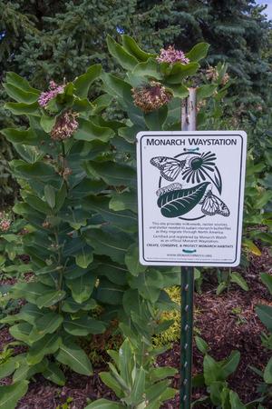 Monarch Waystation bord met Common Milkweed (zijdeplant) op de achtergrond. Deze vlinder tuin geeft monarchvlinders (Danaos plexippus) en andere insecten een plek om te voeden, rust, en leggen eieren.