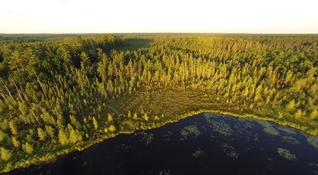 aerial photograph: Lake gives way to bog, conifer swamp,then white pines and northern hardwood forest.