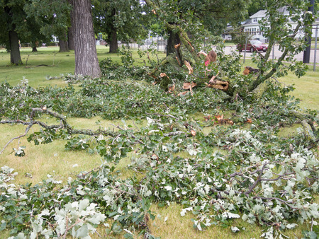 wind down: A wind storm knocked down the strong branches of this oak tree creating destruction throughout the city.