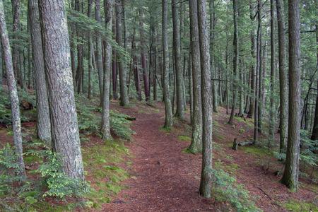 Omzoomde wandelpad leidt door een Noord-Wisconsin bos in de zomer.