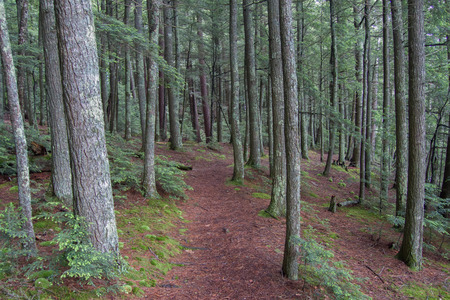 Tree-lined hiking trail leading through an Northern Wisconsin forest in the summer time. Stock Photo