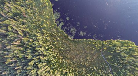aerial photograph: A boardwalk extends through a conifer swamp and bog to get hikers and canoers to the waters of a northern lake. Aerial photo