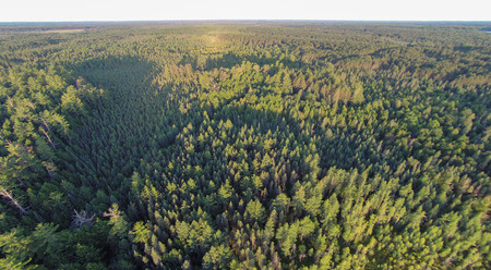 aerial photograph: Northern Wisconsin conifer forests viewed from the air.