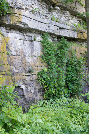dolomite: Cracks in the Dolomite  Limestone cliffs at High Cliff State Park, WI support the growth of many plants .  This rock formation is part of the Niagara Escarpment. Stock Photo