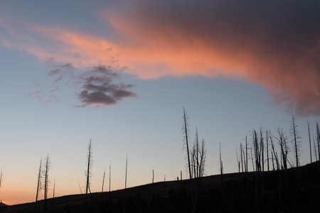 A forest fire killed these pine trees in Yellowstone National Park.  These dead trees are silhouetted against the colorful sky and clouds of sunrise.