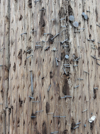 telephone pole: Many staples, and bent nails with flat heads, used to hang up signs and posters, cover this old wooden telephone pole Stock Photo