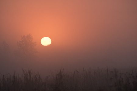 come up: The sun has come up over the marsh and through a thick fog, making the trees and other plants in the landscape bathed in and orange glow. Stock Photo