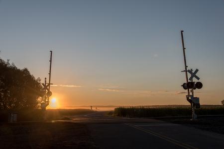 ferrocarril: Vías de tren y ferrocarril que cruzan al amanecer. Niebla está mintiendo bajo de la mañana en el Ferrocarril Tracksover la carretera y bañado en una luz dorada
