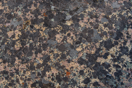 breaking down: Many different shades and colors of lichen cover this rock, while slowly breaking down the hard surface as they obtain minerals for growing. Stock Photo