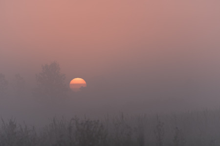 come up to: The sun has come up over the marsh and through a thick fog, making the trees and other plants in the landscape bathed in and orange glow. Stock Photo