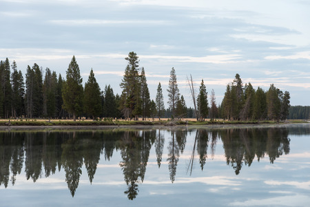 yellowstone: Calm surface water of the Yellowstone River reflecting the shapes of pine trees and the clouds in the sky.  Yellowstone National Park, Wyoming. Stock Photo