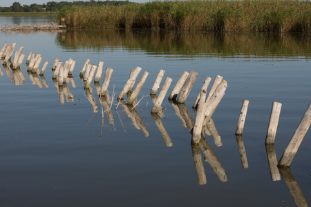 protrude: Rows of wooden post protrude from the water near the wetland shore of a shallow lake.