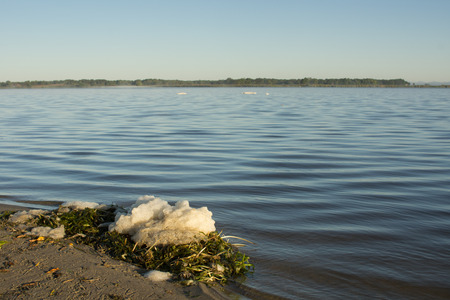 A clump of foam sits on a sand beach, on a pile of wild celery (seaweed).    Foam on the water can be caused by natural processes, or by pollution in the lake.
