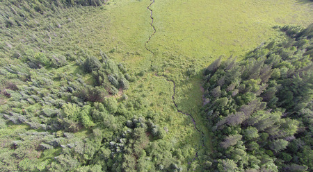 aerial photograph: Viewed from the air a forest opens up into a flat sedge meadow wetland with a small creek runnnig through it. Stock Photo