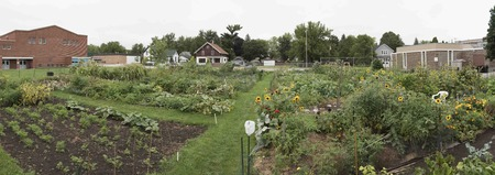 An urban community garden full of vegetables and flowers growing and ready for harvest.  They are great way for residents of the city to grow broccoli, sunflowers, tomatoes, potatoes and other veggies.