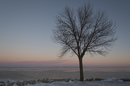 ash tree: Just after sunset is a pastel sky with a Green Ash tree silhouetted against it. Stock Photo