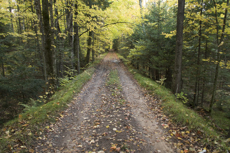 north woods: Dirt lane going straight through the North Woods of Wisconsin.