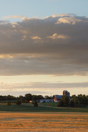 The early morning light leaves this field of freshly harvested winter wheat golden yellow.  In the background in a farm with a barn and silos, while the has a few clouds.