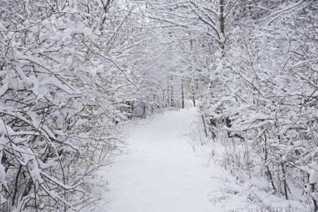 Een wandelpad snijden door besneeuwde bomen en struiken na een sneeuwstorm.