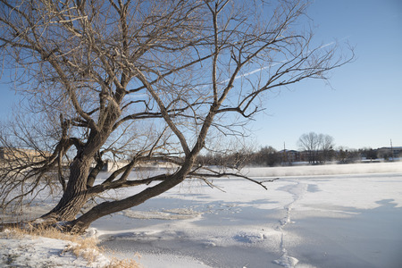 Willow tree bends out over the ice and snow of a frozen river.