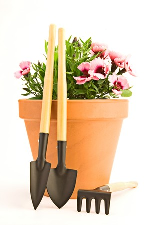 Beautiful carnation in a pot and garden tools photo
