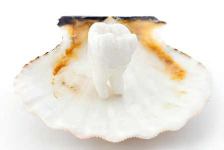 Healthy teeth concept. Real human wisdom tooth in an oyster shell photo