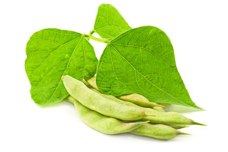 Fresh kidney beans with leaves on white