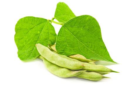 soja: Haricots frais avec des feuilles sur fond blanc