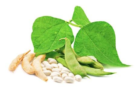 kidneybohnen: Frisch und trocken Kidney-Bohnen mit Bl�ttern auf wei�