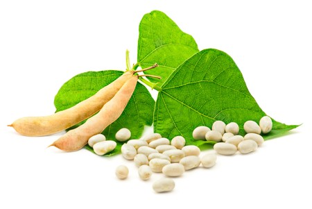 Fresh and dry kidney beans with leaves on white Stock Photo - 7885519