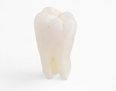 Real Human Wisdom tooth photo