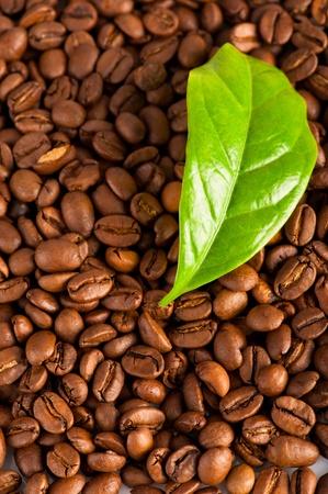 planta de cafe: Macro de granos de caf� y hoja verde de caf�