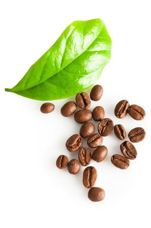 planta de cafe: Granos de caf� y hoja verde de la planta de caf� en blanco