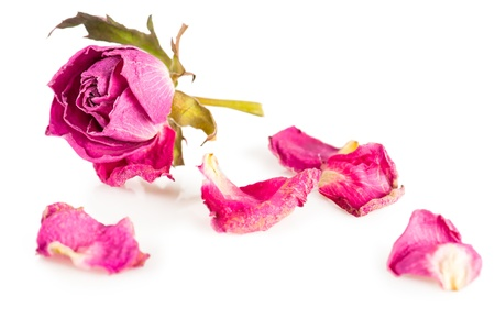 Single dry rose on white. Shallow depth of field Stock Photo