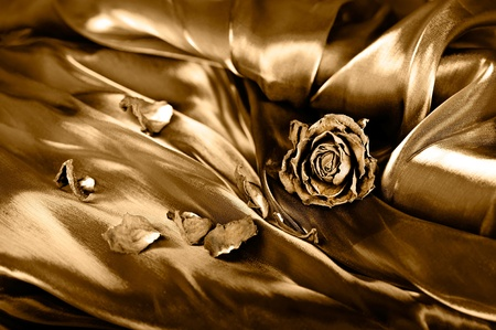 Vintage background: Dry rose on satin. Gold colored image, shallow depth of field photo