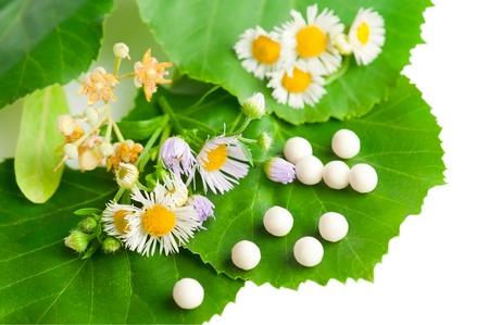 homeopatia: Medicina alternativa. Flores silvestres de manzanilla y hierbas con medicamentos homeop�ticos. Profundidad de campo